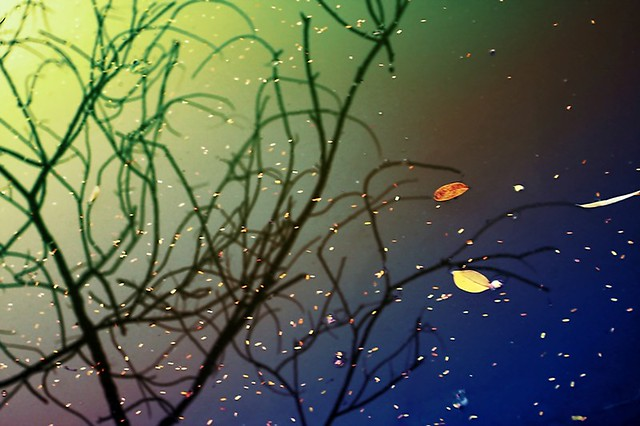 fall remaining
