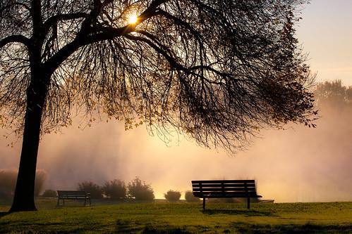 roses mist tree fall fog sunrise bench illinois bushes 70200 wheeling 5dmkii
