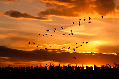 jason slr bird birds animal digital project lens fly flying wings nikon wildlife flight beak feathers feather 365 300 nikkor dslr 70300mm 70 vr singlelensreflex feathered hedlund 70300 2011 project365 nikkor70300mm 70300mmf4556gvr f4556g nikkor70300mmvr nikkor70300mmf4556gvr jasonhedlund hedl0071