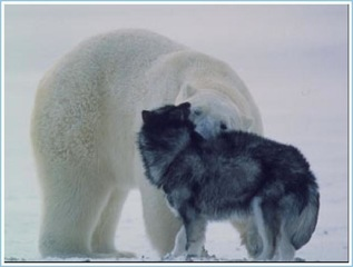Polar Bear Hugs Dog (4 Of 6)