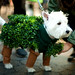 Chia pet! by colormekatie