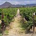 De la Uva pasa al Vino, Oh! Feliz vino! por Don César