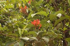 Guyana-9013