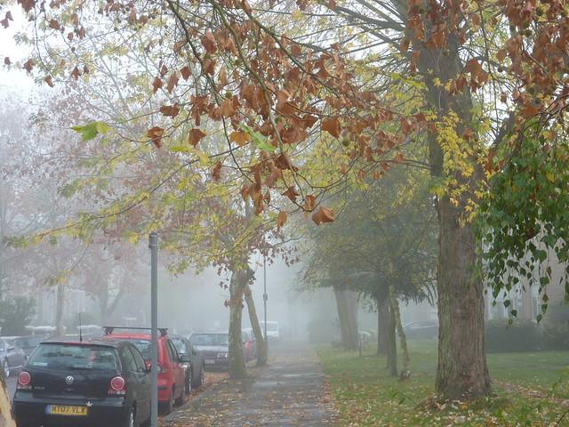 Sunday fog_0116
