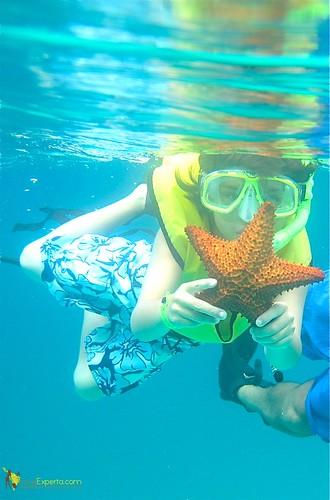 kids snorkeling star fish roatan