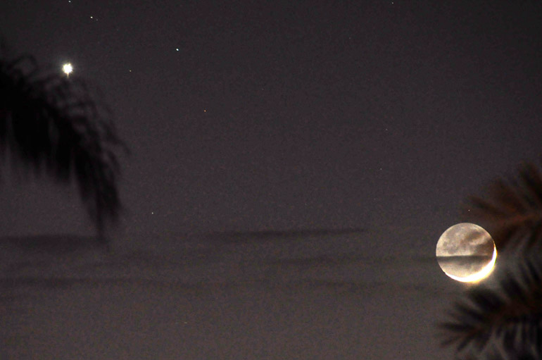 web_conjunction_palmtrees_0282