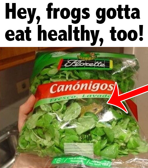 Frogs Eat Salad! Image via rohej.hu