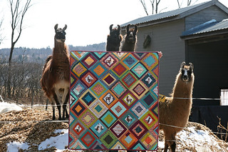 a lovely llama quilt
