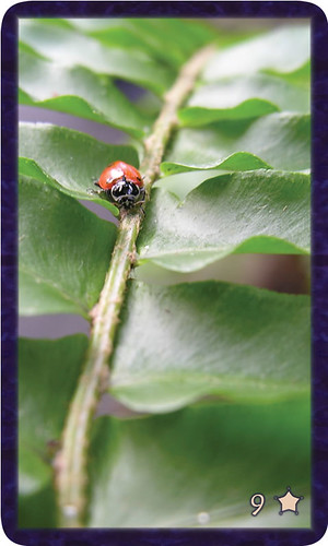 Macro photo of single red ladybug traversing a green leaf. Gratitude Tarot card 9 of Thankfulness calls us to the wisdom and truth of our own voice.