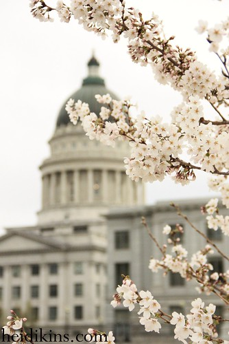 Salt Lake Capitol Bldg_Cherry Blossom_March 2012 (1)