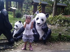 老鼠與熊貓