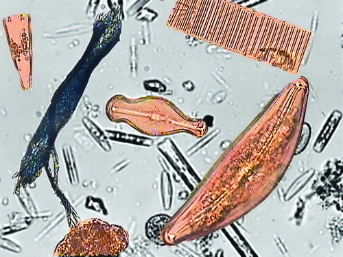 Columbia River Water Diatoms
