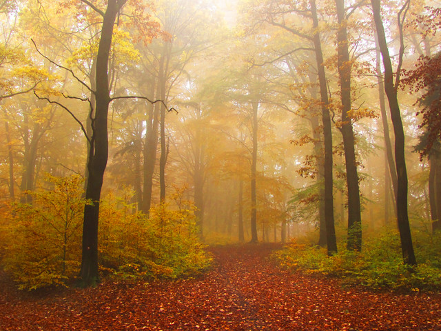 Autumn foggy forest 03