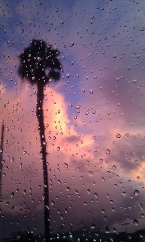 Rain, clouds, sunset light and a palm tree. #bwela