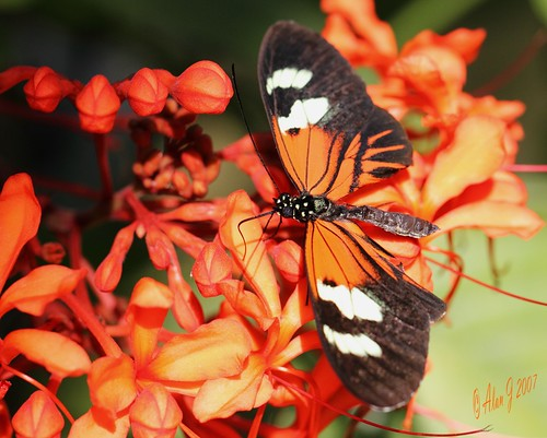 canon butterfly niceshot florida 7d mygearandme ringexcellence 100mmmacrof28lisusm