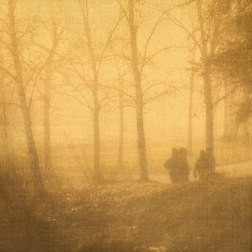 morning trees mist texture boys misty fog finland square foggy thegalaxy contemporaryartsociety goldenmorning truthandillusion goldencrotalo galleryoffantasticshots