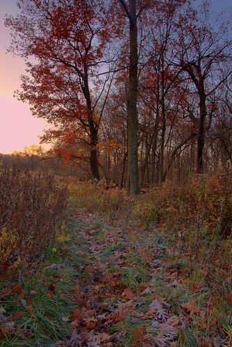 morning november autumn fall sunrise illinois oak desplainesillinois cookcountyforestpreserves kloempkenprairie