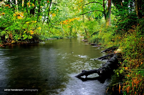 autumn green fall water leaves yellow river stream foliage nikkor stayton d7000 18105mmf3556gvr