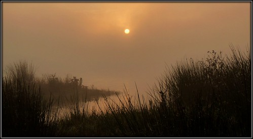 uk sun mist nature water grass fog sunrise lancashire preston brockholes