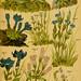 Taschenflora des Alpen-Wanderers