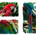 Parrot Triptych by Orionid