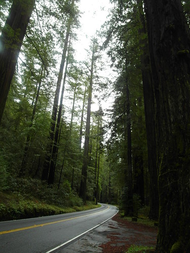 Redwoods,