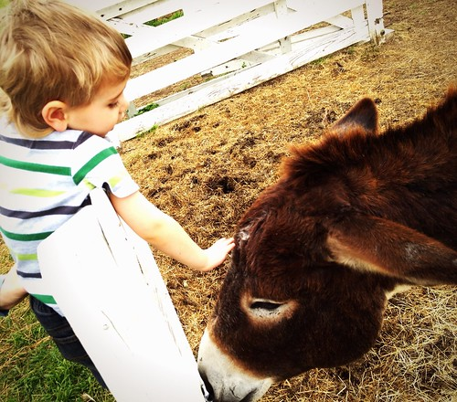 Jude and the Donkey