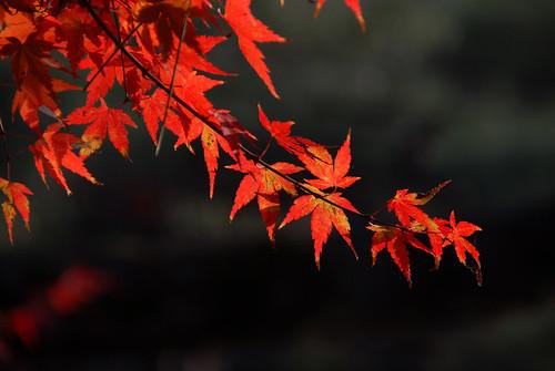 Kyoto Autumn leaves Japan