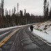 Pedestrian Bison, Yellowstone National Park, WY, October 07, 2011