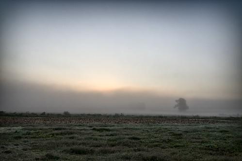 fog sunrise river corn cornfield farm tennessee uncool clarksville cumberlandriver uncool2 uncool8 uncool3 uncool4 uncool5 uncool6 uncool7