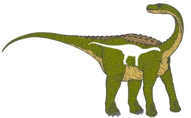 Nopcsa Ferenc - Magyarosaurus