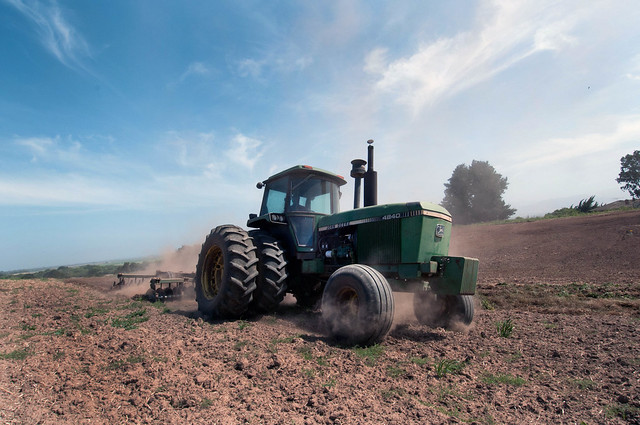 A tractor turns the cover crop into the soil in preparation for planting.