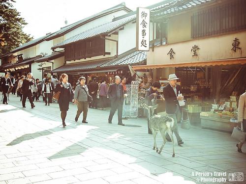 2011Kyoto_Japan_ChapFourteen_7