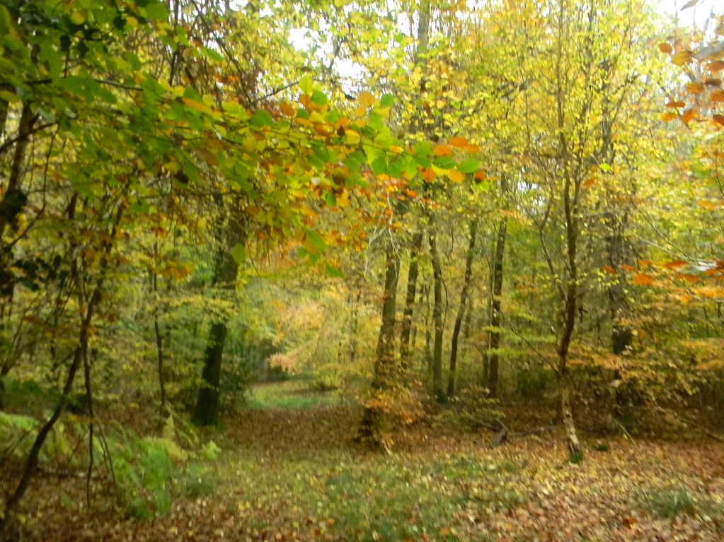 Autumn Colours 5 Princes Risborough to Great Missenden Monkton Wood