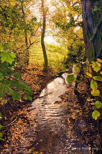 autumn landscape autumnleaves pocklington eastyorkshire barrypotter valeofyork yorkshirewolds nikond90 barrypotternet edenmedia barrypotteredenmedia