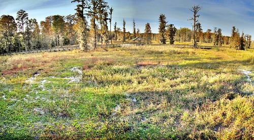 panorama ga georgia hdr augustaga phinizyswamp phinizyswampnaturepark canonpowershotsx20is