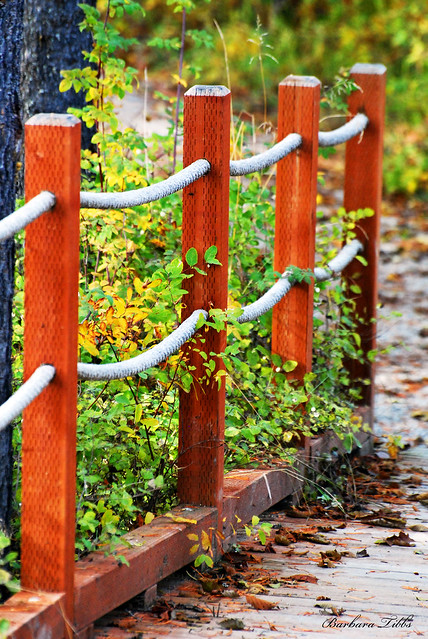 Autumn rope fence explored flickr photo sharing for Garden decking with rope