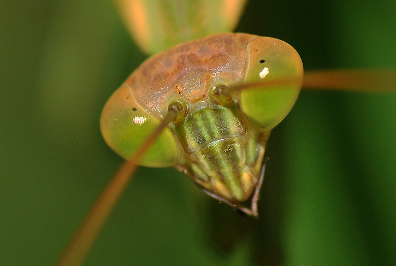 螳螂8912