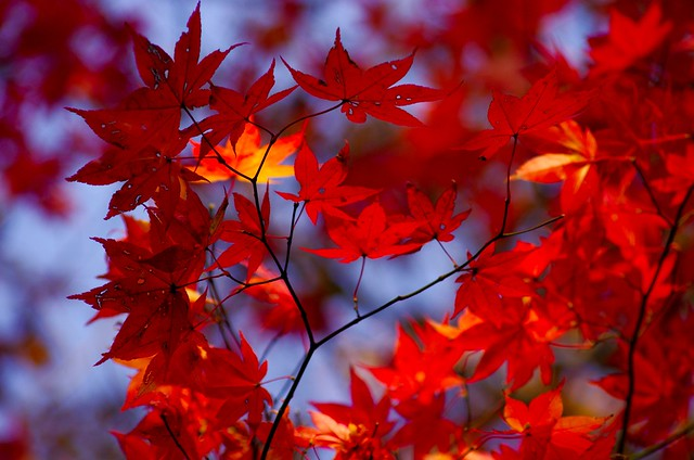 falling leaves essay