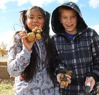 These students at Dayton Elementary in Dayton, Nevada harvest potatoes from their school's garden. The story of how local food is helping increase healthy food access in their community, and many others stories like it, are in USDA's new Know Your Farmer, Know Your Food Compass.