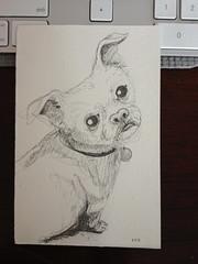 Libby dog