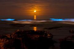 Bioluminescent Red Tide San Diego 2011