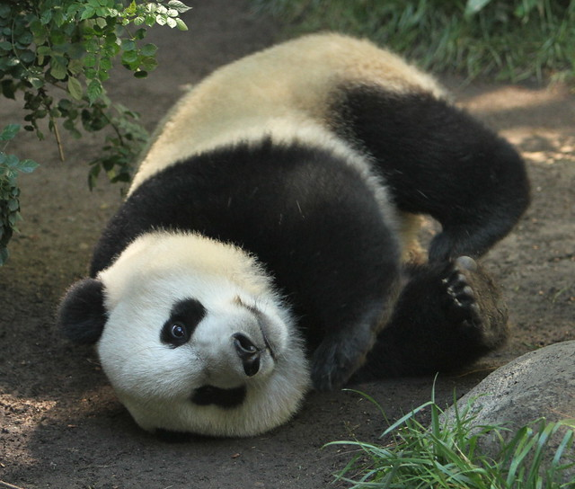 Yun Zi was rolling all around the exhibit this weekend