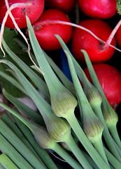 garlic scape + radish
