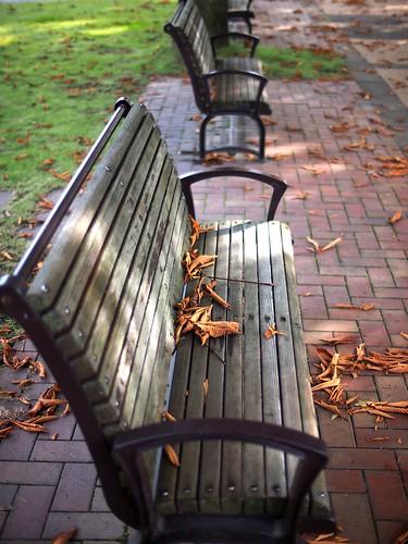 park autumn sunlight fall bench voigtlander fallenleaves voigtlandernokton25mmf095 nokton25mmf095 olympuspenep3 gettyimagesjapanq4