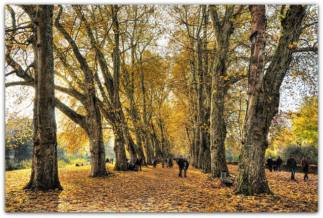 Autumn Tübingen