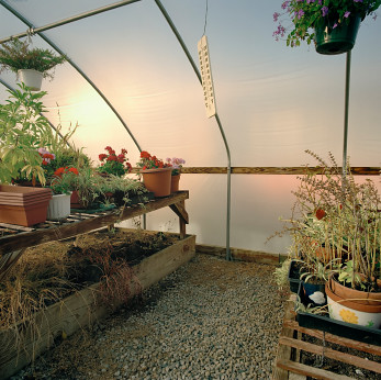 How to over winter plants in an unheated greenhouse - Overwintering geraniums tips ...