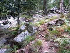 Sentier Fumicosa/Samulaghja : cairn de bifurcation vers Fumicosa/Samulaghja
