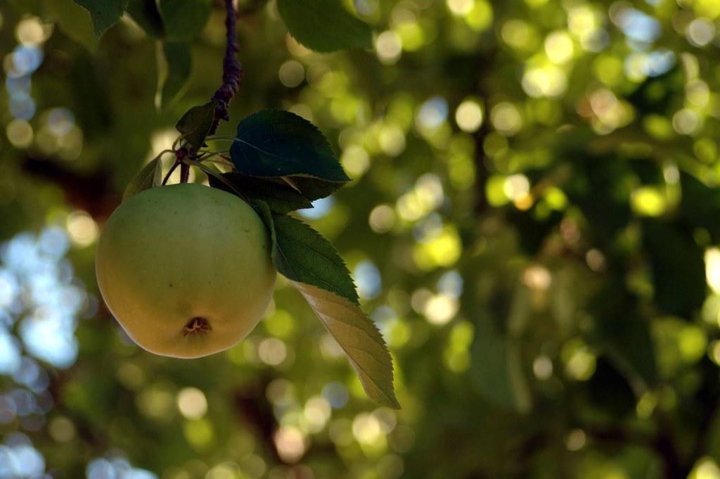 day 265 - apple