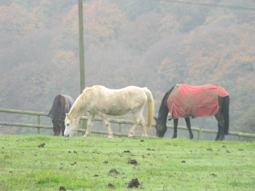 Horses Princes Risborough to Great Missenden